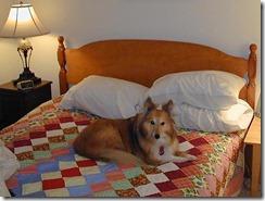 tasha bed 2000