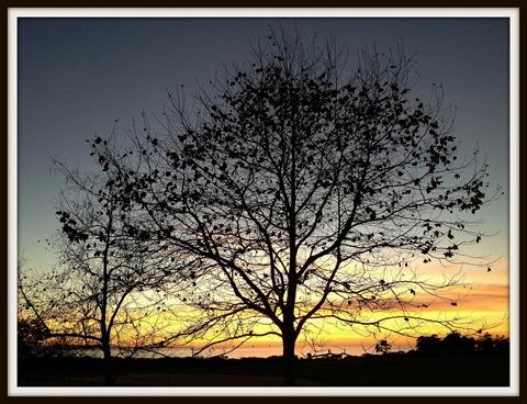 Bluffs_Tree_20140107-001