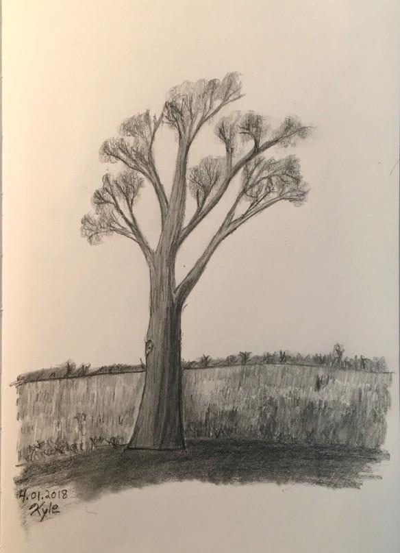 Tree 2018-04-01 14.34a